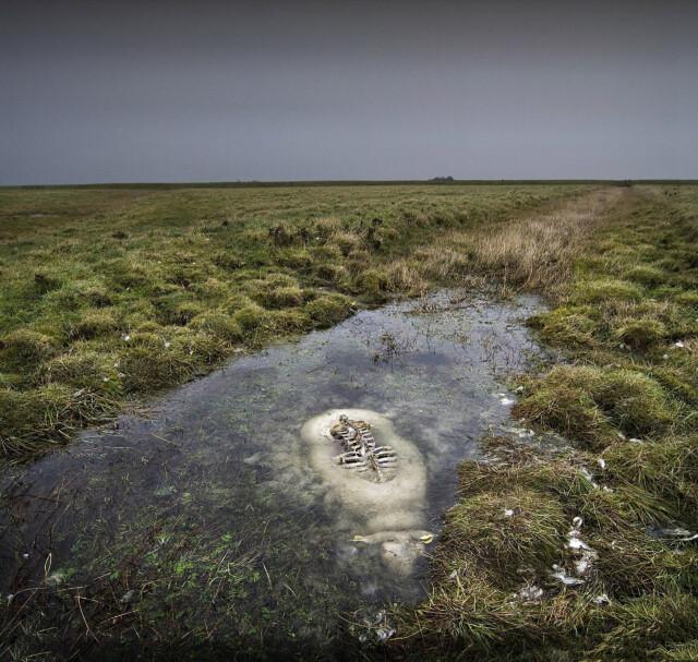 Sheep in a bog